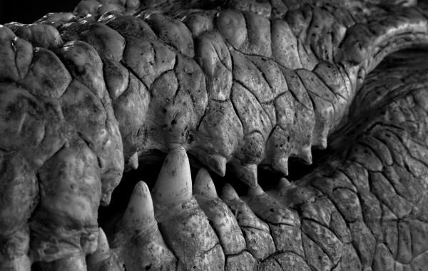 Krokodil 04